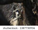 Curious River Valley Mule Deer