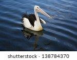 australian pelican gliding on... | Shutterstock . vector #138784370