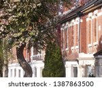 Row of semi-detached historic antique Edwardian houses on street in Gloucester UK with spring flowering cherry in foreground