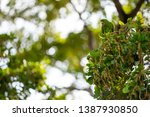 wildlife stock photo two green... | Shutterstock . vector #1387930850