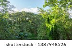 impressive jungle view with its ... | Shutterstock . vector #1387948526