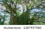 beautiful  massive jungle tree  ... | Shutterstock . vector #1387957580