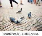 four doves on a cobbled street...   Shutterstock . vector #1388070356