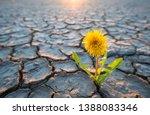 plant growing in desert drought ... | Shutterstock . vector #1388083346
