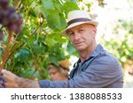 gardener picking ripe red... | Shutterstock . vector #1388088533