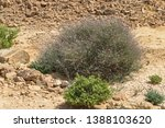 Two Small Shrubs That Are...