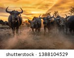 Crowd Buffalos In Sunset Sky I...