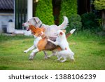 three dogs playing on a green... | Shutterstock . vector #1388106239