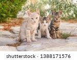 Three Curious Baby Cat Kittens  ...