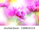 Defocus Beautiful Purple...