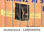 Stock photo a kitten with a marble snout looks out curiously from a small window in a cardboard box placed in a 1388340056