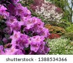 view of the colorful blooming... | Shutterstock . vector #1388534366