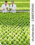male biochemists discussing... | Shutterstock . vector #1388539040
