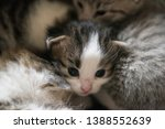 Stock photo little striped wild kittens two weeks the kittens are not able to walk 1388552639