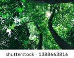 sunlight shining through leaves ... | Shutterstock . vector #1388663816