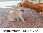 cute white dog playing with... | Shutterstock . vector #1388717723