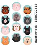 Set Of Various Pig Face