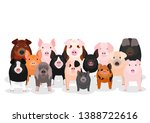 Group Of Various Breeds Pigs