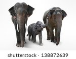 Stock photo elephant father and mother with baby elephants walking on white background 138872639
