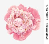 luxurious pink peony flower... | Shutterstock .eps vector #138875078