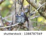 Anna\'s Hummingbird At Delta Bc...