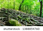 tree roots on forest ground.... | Shutterstock . vector #1388854760