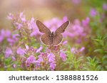 orange butterfly pollinates... | Shutterstock . vector #1388881526