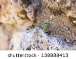 Small Flower Grows In The Rock