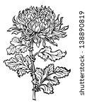 flower chrysanthemum black and...   Shutterstock . vector #138890819
