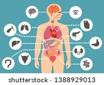 simulation of human internal... | Shutterstock .eps vector #1388929013
