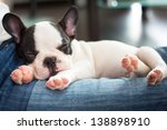 French Bulldog Puppy Sleeping...