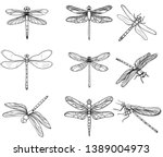 insects dragonflies  set... | Shutterstock .eps vector #1389004973