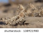Dry Yellow Grass In The Sand