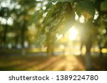 summer park background   nature ... | Shutterstock . vector #1389224780