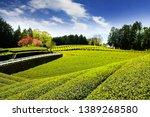 tea plantation with clear sky... | Shutterstock . vector #1389268580