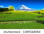 tea plantation on the back... | Shutterstock . vector #1389268583