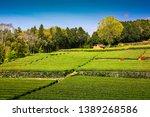 tea plantation with clear sky... | Shutterstock . vector #1389268586