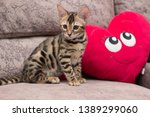 Stock photo bengal kitten playing in the background 1389299060