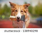 Border Collie Dog Portrait Wit...