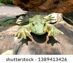 Green Stone Frog Statue China...