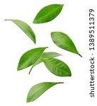 falling citrus leaf  lemon ... | Shutterstock . vector #1389511379