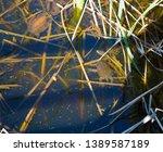 long necked swamp tortoises... | Shutterstock . vector #1389587189