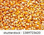 close up of yellow corn seeds | Shutterstock . vector #1389723620