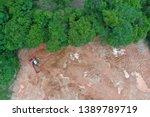 deforestation. logging and...