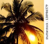 Tropical Sunset  Palm Trees And ...