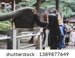 travel asian woman feeding thai ... | Shutterstock . vector #1389877649