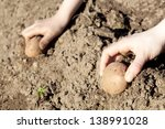 human hands planting potato... | Shutterstock . vector #138991028