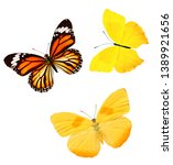 Stock photo set of colored butterflies isolated on white tropical insects 1389921656