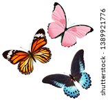Three Butterflies Of Different...