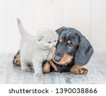 Stock photo playful baby kitten with dachshund puppy on the floor at home 1390038866